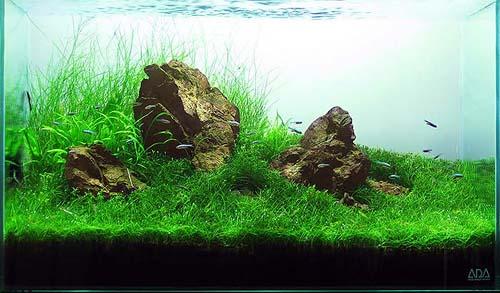 grass_design