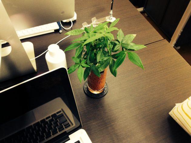 デスク植物