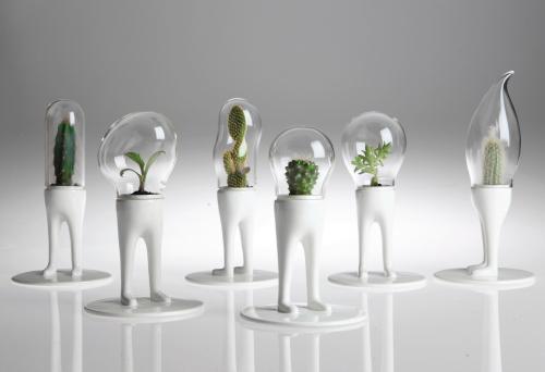 卓上観葉植物1