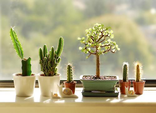 卓上観葉植物2
