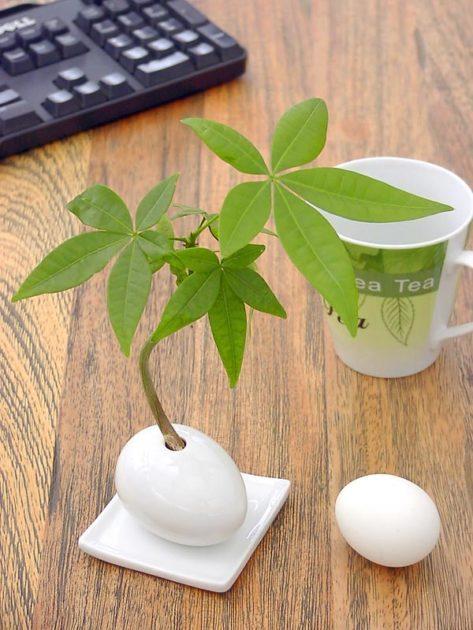 卓上観葉植物4