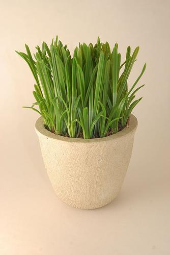 卓上観葉植物5
